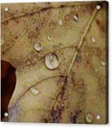 Fall Droplets Acrylic Print