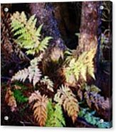 Fall Ferns Acrylic Print