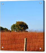 Fall Field Acrylic Print