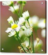 Fall Flowers Acrylic Print
