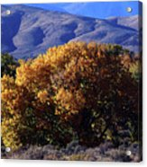 Fall Foliage And Hills, Carson City Acrylic Print