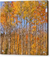 Fall Foliage Color Vertical Image Acrylic Print