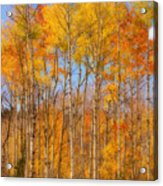 Fall Foliage Color Vertical Image Orton Acrylic Print