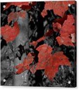 Fall Foliage In Pennsylvania Acrylic Print