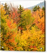 Fall Foliage In The Mountains Acrylic Print