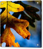 Fall Foliage Leaf Near Ruidoso Nm Acrylic Print