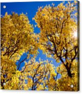 Fall Foliage Near Ruidoso Nm Acrylic Print