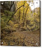 Fall Foliage Number 57 Acrylic Print