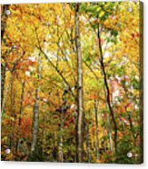 Fall Foliage On The Hike Up Mount Monadnock New Hampshire Acrylic Print