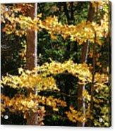 Fall Forest 1 Acrylic Print