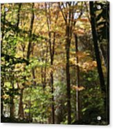 Fall Forest 2 Acrylic Print