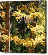 Fall Forest 3 Acrylic Print