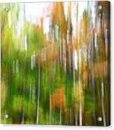 Fall Forest Colors Acrylic Print