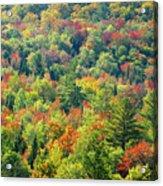 Fall Forest Acrylic Print