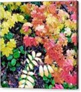 Fall Forest Floor Acrylic Print