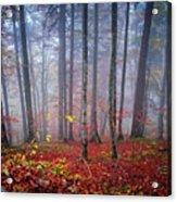Fall Forest In Fog Acrylic Print