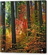 Fall Forest Splendor Acrylic Print