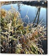 Fall Frost On Grasses Along Nippersink Creek Acrylic Print