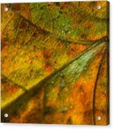 Fall Fusion Acrylic Print