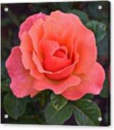 Fall Gardens Rosh Hashana Rose Acrylic Print