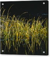 Fall Grasses - Snake River Acrylic Print