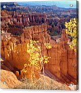 Fall In Bryce Canyon Acrylic Print