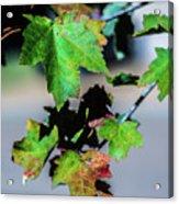 Fall In Full Swing Acrylic Print