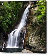 Fall In Jungle Acrylic Print