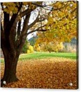 Fall In Kaloya Park 8 Acrylic Print