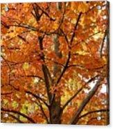 Fall In Kayloya Park 2 Acrylic Print