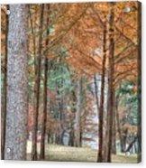 Fall In Korea Acrylic Print