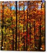 Fall In Ontario Canada Acrylic Print