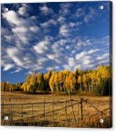 Fall In The Cariboo Acrylic Print