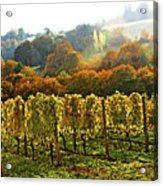 Fall In The Red Hills Of Dundee Acrylic Print
