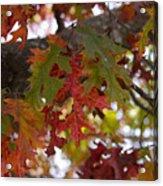 Fall In Virginia Acrylic Print