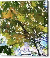 Fall In Woods Acrylic Print