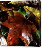 Fall Into Fall Acrylic Print