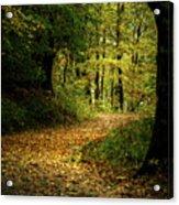 Fall Is Just Around The Corner Acrylic Print