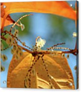 Fall Jewels Acrylic Print