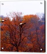 Fall Landing Acrylic Print