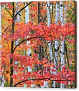 Fall Layers Acrylic Print