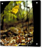 Fall Leaf And Twig Acrylic Print