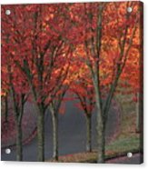 Fall Leaves Along A Curved Road Acrylic Print