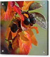 Fall Leaves And Berries Acrylic Print