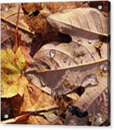 Fall Leaves And Dew 9 2017 Acrylic Print