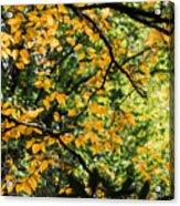 Fall Leaves In The Smokies Acrylic Print