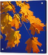 Fall Leaves In Virginia Acrylic Print