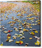 Fall Leaves Acrylic Print by Michael Tesar