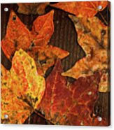 Fall Leaves Acrylic Print