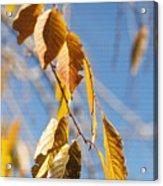 Fall Leaves Study 3 Acrylic Print
